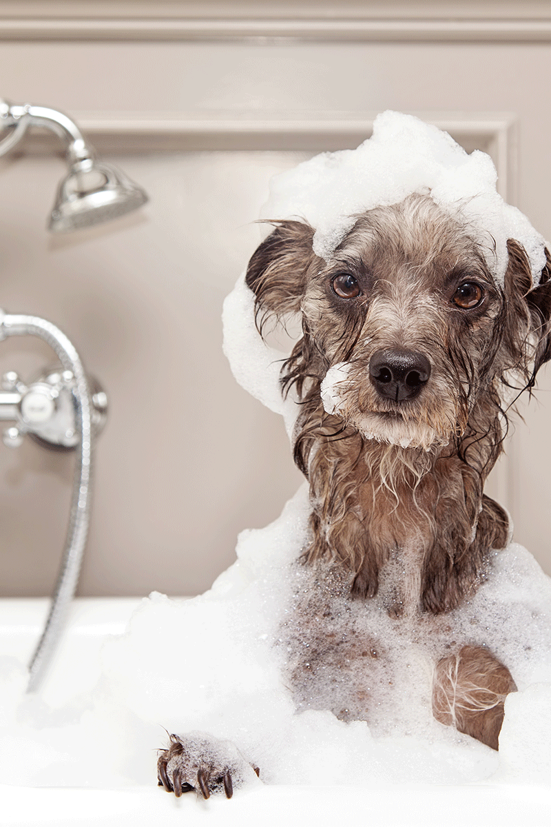 image of dog in a bubble bath