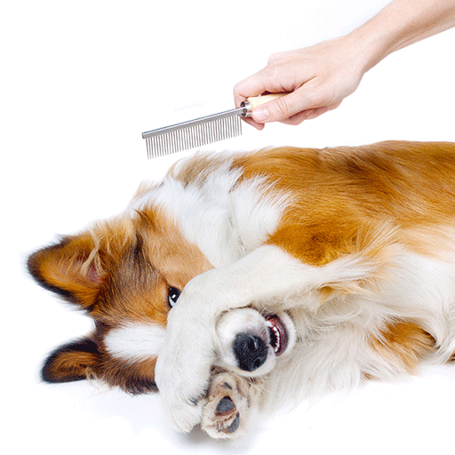 image of dog being groomed