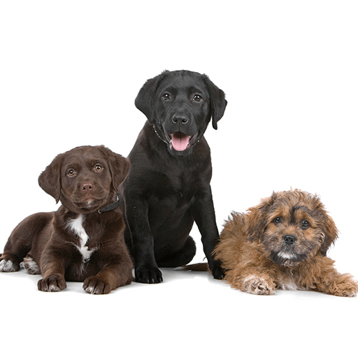 image of 3 dogs sitting