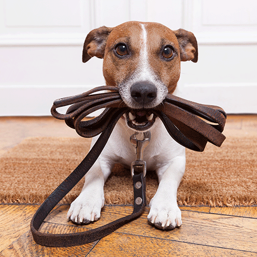 image of dog holding leash in mouth