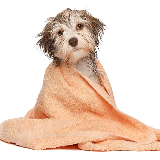 image of dog wrapped in towel