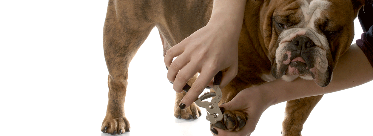 image of dog having nails clipped